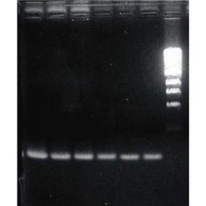 OmniTemplate™ Genomic DNA Isolation