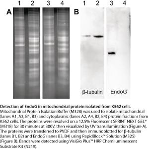 Mitochondrial protein isolation buffer